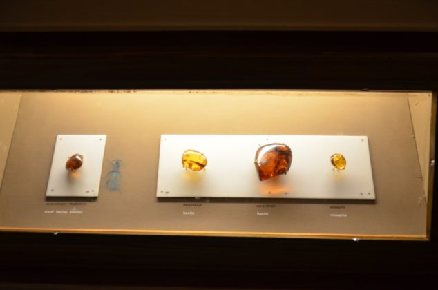 display amber in the museum