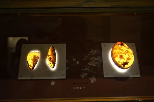 backlit display showing fossilized amber