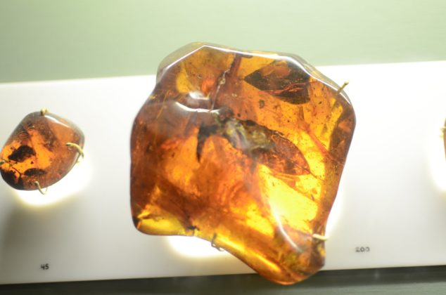 Fossilized leaf in amber