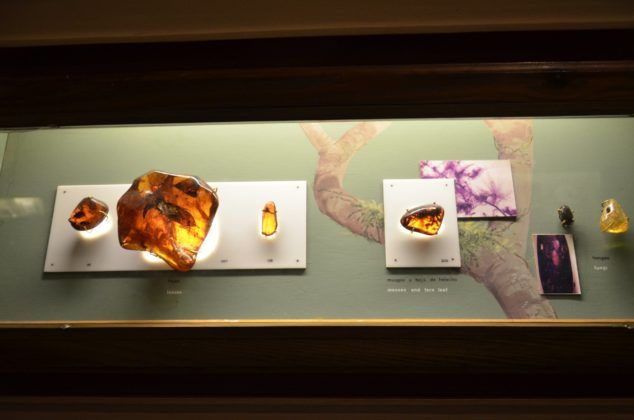 Polished pieces of amber on display