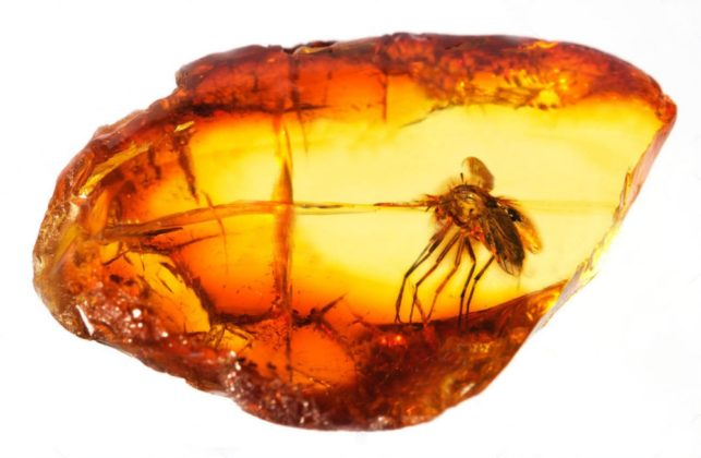 prehistoric insects trapped in amber