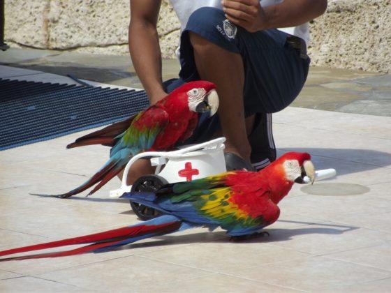 Ocean world parrot show