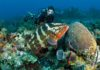 diving in Sosua reefs with grouper