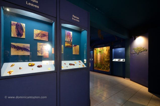 Amber pieces on display