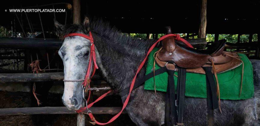 Grya horse at Lorilar Ranch