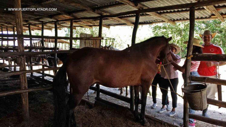 Horses at the Lorilar Ranch, Puerto Plata