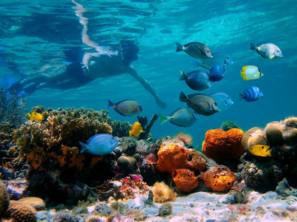 Punta rucia snorkeling